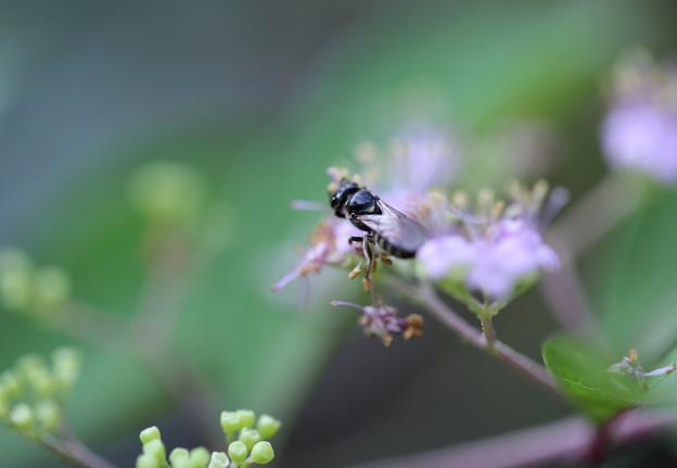 コムラサキ 蜂