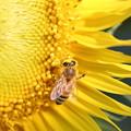 花粉まみれ