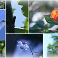 Photos: 梅雨明け