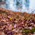 写真: 落ち葉