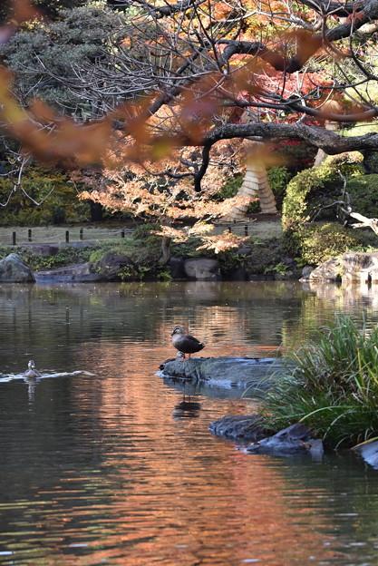 2017.11.23 東京・旧古河庭園