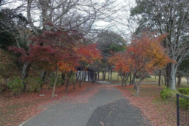 公園へ散歩…そして身欠きニシンの甘露煮に挑戦!