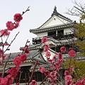 2月の松山城