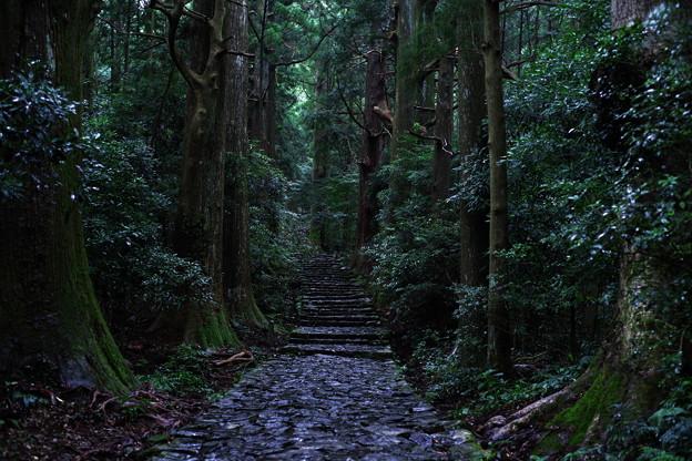 熊野古道_大門坂
