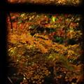 色めく輝きは窓枠の瞬きの中