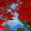 写真: 河口湖紅葉祭り