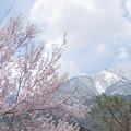 写真: 白川村から春を見る