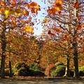 写真: 秋のひととき