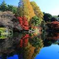 写真: 湖面に映る紅葉
