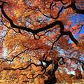 写真: 紅葉と青空