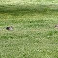 草の上でのんびりと