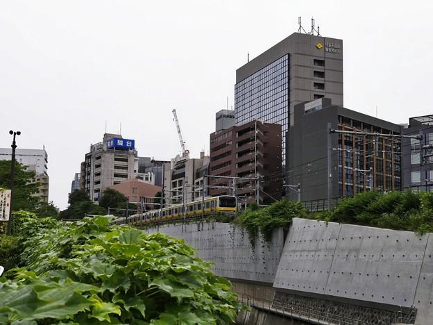 6月11日 神田川