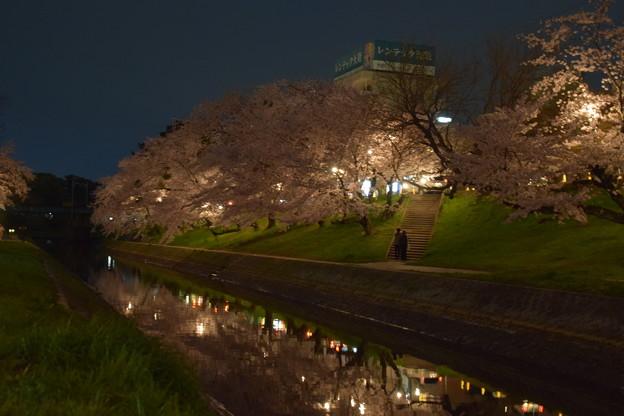 河原の夜桜