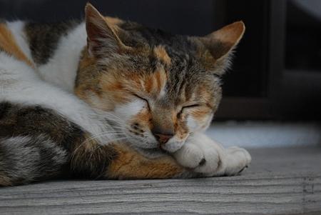 満福寺の猫