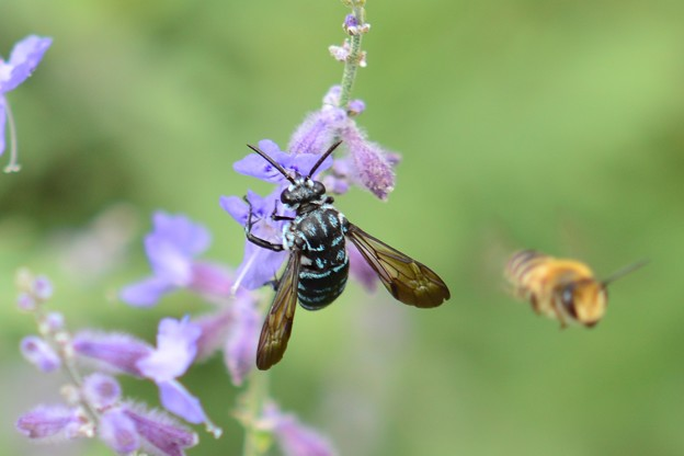 幸せを呼ぶ青い蜂・1