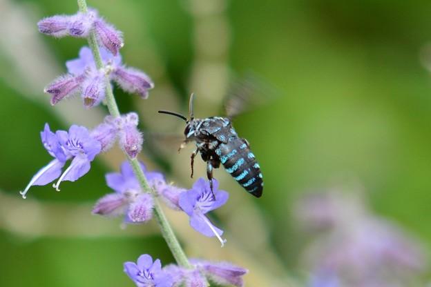 幸せを呼ぶ青い蜂・3