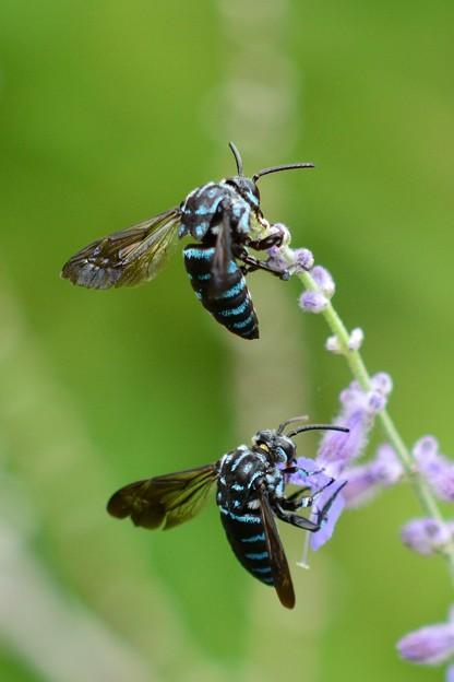 幸せを呼ぶ青い蜂」・6