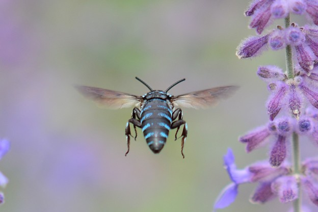 幸せを呼ぶ青い蜂・9
