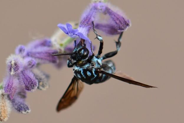 幸せを呼ぶ青い蜂・10