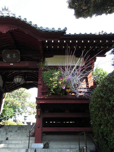 090629 護国寺不老門の飾り
