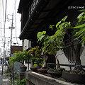 Photos: 丁子屋向かいの民家