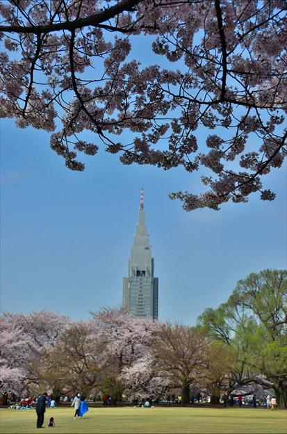 ドコモ桜まみれ