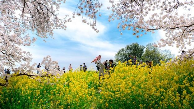 写真: 春之新生