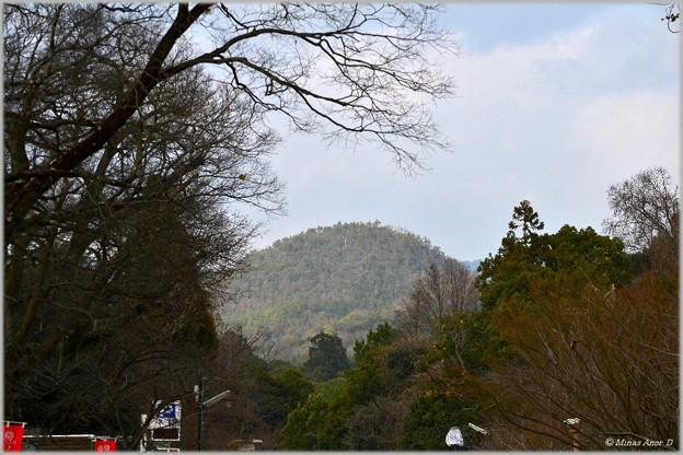 Photos: 葵