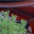写真: 松が枝