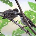 Photos: 雀の子育て!爽やかに