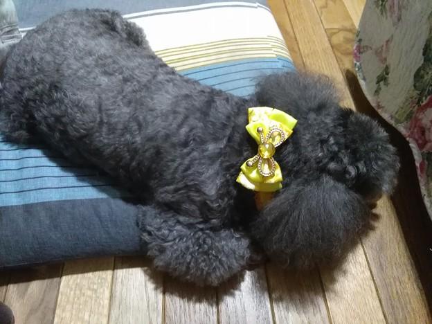 熟睡するロッキー