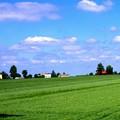 青い空と麦畑1
