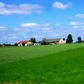 青い空と麦畑2
