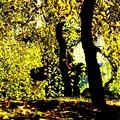 黄葉のカーテン
