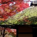 常寂光寺の茅葺の門に紅葉が重たく覆う