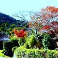 萱葺と紅葉