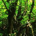写真: 木漏れ日・3