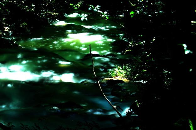 写真: 木漏れ日・5