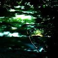 木漏れ日・5
