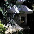 白い花のある風景!