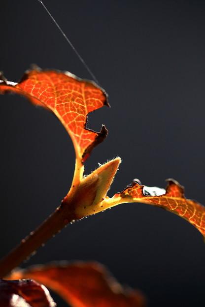 写真: 枯れゆく秋!