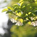 写真: 咲いた咲いた~♪