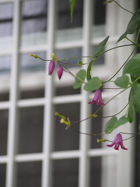 写真: 窓辺で リンリン♪