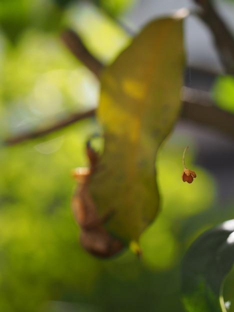 写真: ある秋の日