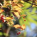 写真: 暮れの秋