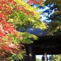 写真: 秋はこれから