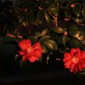 写真: 夕焼け色