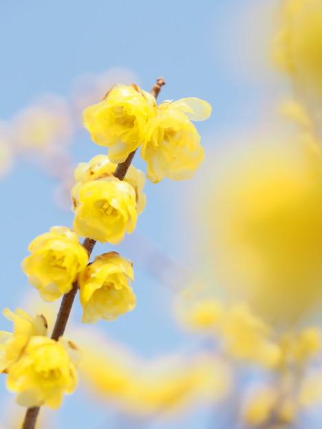 写真: 冬空に描いた春