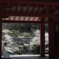 写真: 13_楼門から鳥居をみる-3809