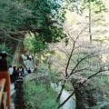 写真: 02榛名神社_神橋-000021